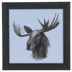 Animal Study (Moose) Framed Print
