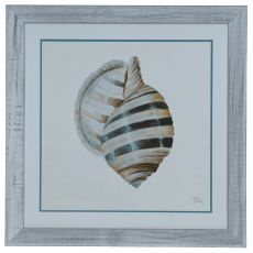Modern Shell 1 Framed Print