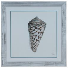 Modern Shell 2 Framed Print