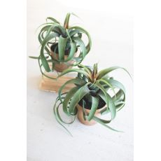 Artificial Airplant In A Pot, Set of 2