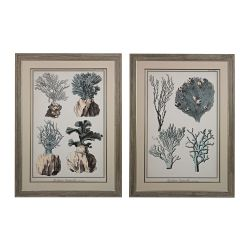 Oversized Coral Species I, II - Fine Art Giclee Under Glass