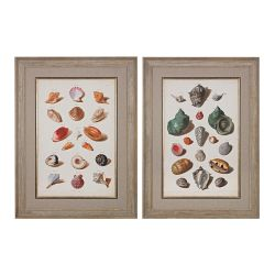 Muller Shells V, VI - Fine Art Giclee Under Glass