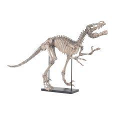 Tyrannos Dinosaur Skeleton, Aged Bone