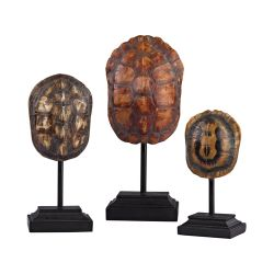 Set Of 3 Turtle Shells On Stands