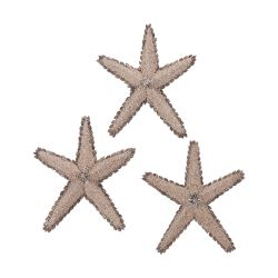 Mixed Shell Star Fish