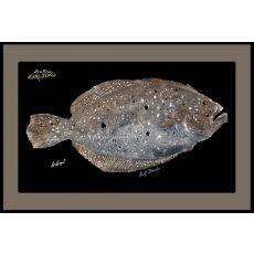 Flounder Mat With Border Floor Mat