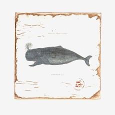 Humpback Whale Lithograph Art