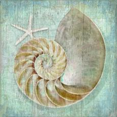 Nautilus Wall Art
