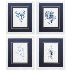Seaweed Specimens Set of 4 Framed Beach Wall Art
