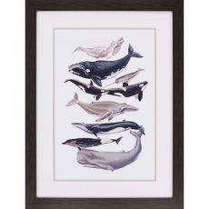 Whale Display I Framed Art