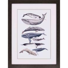 Whale Display II Framed Art