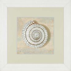 Aqua Seashell Framed Art