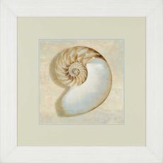Aqua Nautilus Framed Art