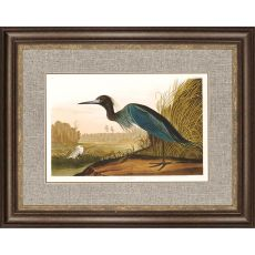 Blue Crane Framed Art