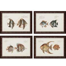 Antique Fish Pk/4 Framed Art