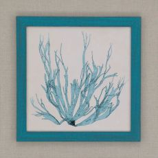 Coastal Seaweed I Framed Art