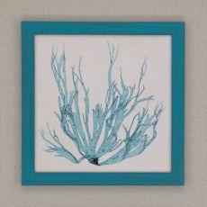 Coastal Seaweed I Framed Art