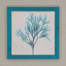 Coastal Seaweed III Framed Art