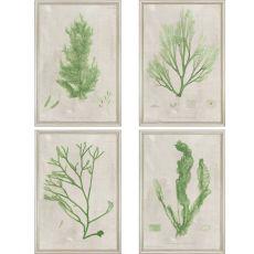 Seaweed Pk/4 Framed Art