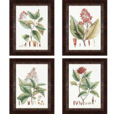 Crimson Botanical Pk/4 Framed Art