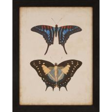 Antique Butterfly III Framed Art