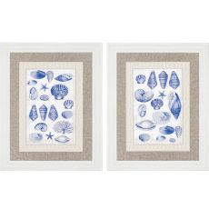 Blue Shells Pk/2 Framed Art