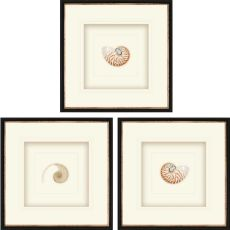 Natural Nautilus Pk/3 Framed Art