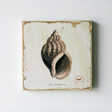 Periwinkle Shell Lithograph Art
