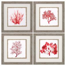 Red Coral Framed Art Set of 4