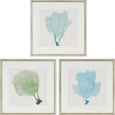 Sea Fan I Framed Art Set of 3