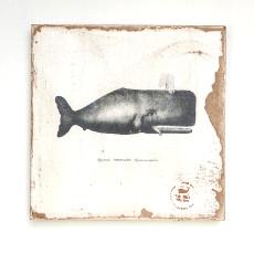 Sperm Whale  Lithograph Art