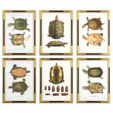 Uttermost Tortoise Study Framed Art, S/6