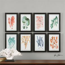 Colorful Algae Framed Art S/8
