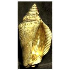 Conch Shell Door Knocker-Brass