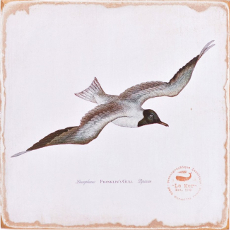 Gull Lithograph Art