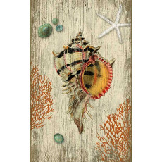 Rustic Shell Wall-Art-SN-563