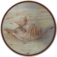"18"" Sea Shell 3 Lazy Susan"