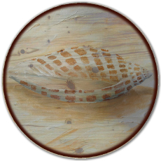 "18"" Sea Shell 4 Lazy Susan"