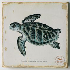 Sea Turtle Lithograph Art