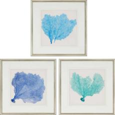 Sea Fan II Framed Art Set of 3