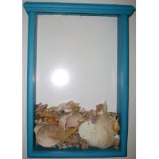 Seashell Collector Display Box