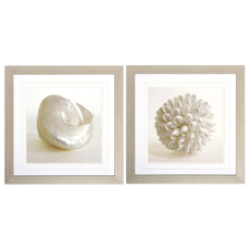Shell Framed Art Set of 2