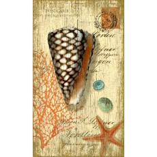 Cone Shell Wall Art