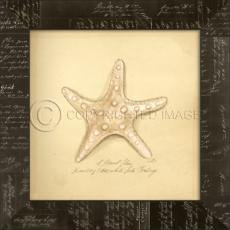 Knolby Star Fish  Framed Art