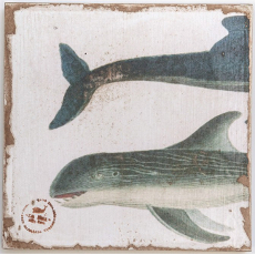Toothed Dolphins 2 Zoom Lithograph Art