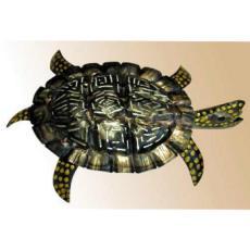 Sea Turtle Wall Sconce