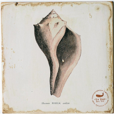Whelk Shell Lithograph Art