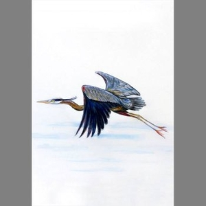 Heron In Flight Designer Flag