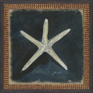 Seashell No1 Framed Art