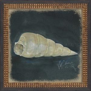 Seashell No3 Framed Art